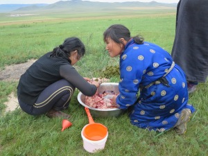 The pile of green grassy material comes from the animal's intestinal tract and rumen, one of the multiple compartments of the stomach that goats, sheep, and other ruminants have to digest the tough grasses of the steppe.