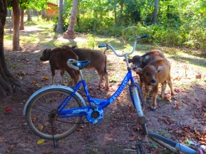 Baby water buffaloes next to a parked bike. A view from the main road on Don Det.