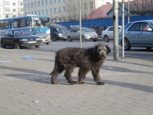 Dogs are often sighted roaming the sidewalks of UB.