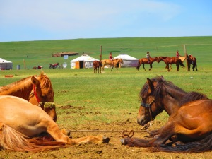 A horse's view of a nomadic herding camp